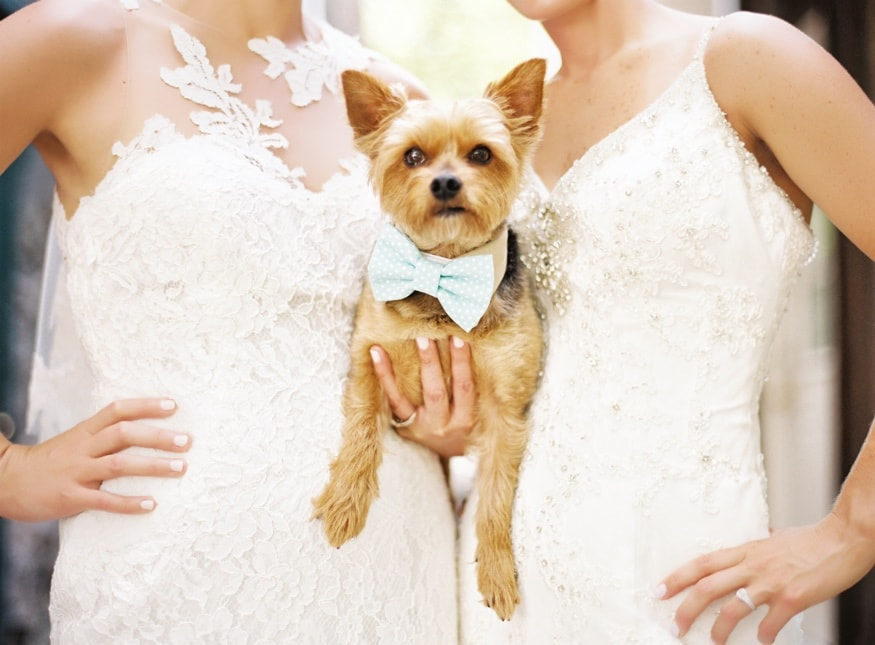 Hollyhedge wedding