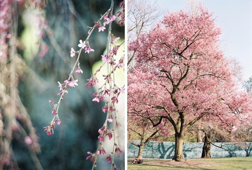 Spring Brooklyn Botanic Garden wedding cherry blossom trees