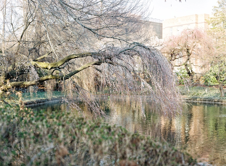 Spring Brooklyn Botanic Garden wedding japanese garden